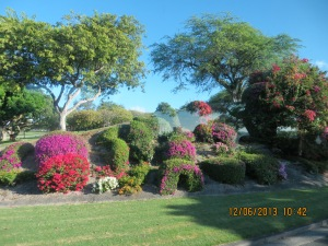 Beautiful gardens in the Punchbowl Cemetery area.
